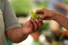 διάβαση τροφίμων στοκ φωτογραφίες