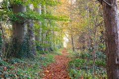 Διάβαση φθινοπώρου στοκ φωτογραφίες