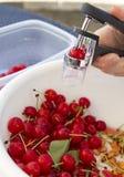 διάβρωση κερασιών ξινή στοκ εικόνες με δικαίωμα ελεύθερης χρήσης