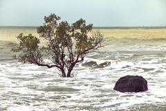 Διάβρωση παραλιών, δέντρα στην κυματωγή Στοκ Εικόνες