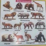 Διάγραμμα άγριων ζώων Στοκ Φωτογραφία