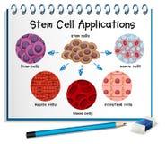 Διάγραμμα που παρουσιάζει διαφορετικές εφαρμογές βλαστικών κυττάρων απεικόνιση αποθεμάτων