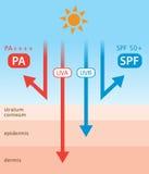 Διάγραμμα των υπεριώδη ακτίνων και sunscreen Στοκ Εικόνες