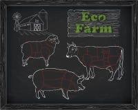Διάγραμμα, χοιρινό κρέας, αρνί και αγρόκτημα βόειου κρέατος σφαγής Στοκ Εικόνες
