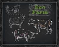 Διάγραμμα, χοιρινό κρέας, αρνί και αγρόκτημα βόειου κρέατος σφαγής Στοκ εικόνα με δικαίωμα ελεύθερης χρήσης
