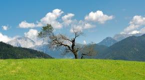 Διάδοση του ενιαίου δέντρου στην πράσινη χλόη στα βουνά στοκ φωτογραφίες με δικαίωμα ελεύθερης χρήσης