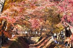 Διάδρομος σφενδάμνου κοντά στη λίμνη Kawaguchi, Ιαπωνία κατά τη διάρκεια του φθινοπώρου Στοκ Φωτογραφίες