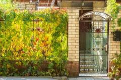 Διάθεση φθινοπώρου, εποχές Φύλλα των άγριων σταφυλιών του ανοιχτού κίτρινου κοκκίνου στοκ φωτογραφία με δικαίωμα ελεύθερης χρήσης