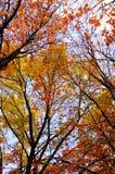 διάθεση φθινοπώρου Στοκ Εικόνες
