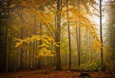 Διάθεση φθινοπώρου Στοκ φωτογραφία με δικαίωμα ελεύθερης χρήσης