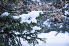 Διάθεση χειμερινού δασική, νέα έτους ` s Στοκ φωτογραφίες με δικαίωμα ελεύθερης χρήσης