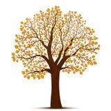 Διάνυσμα δέντρων φθινοπώρου Στοκ Εικόνα
