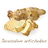 Διάνυσμα αγκιναρών της Ιερουσαλήμ Στοκ Φωτογραφίες