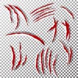 Διάνυσμα γρατσουνιών νυχιών Σημάδι γρατσουνιών νυχιών Αντέξτε ή γρατσουνιά νυχιών ποδιών τιγρών αιματηρή έγγραφο που τεμαχίζεται απεικόνιση αποθεμάτων