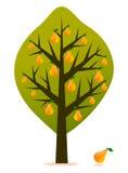 διάνυσμα δέντρων αχλαδιών Στοκ Εικόνες