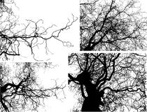 διάνυσμα δέντρων κλάδων Στοκ Εικόνες
