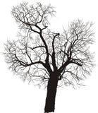 διάνυσμα δέντρων μουριών Στοκ εικόνα με δικαίωμα ελεύθερης χρήσης