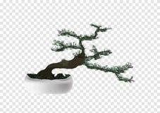 Διάνυσμα δέντρων πεύκων πεύκων μπονσάι στο υπόβαθρο διαφάνειας, μικροσκοπικό λίγο δέντρο με τα πράσινα φύλλα και σκοτεινός καφετή διανυσματική απεικόνιση