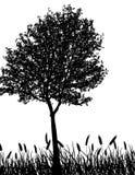 διάνυσμα δέντρων χλόης διανυσματική απεικόνιση