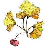 διάνυσμα Κίτρινο φύλλο ginkgo Βοτανικός κήπος εγκαταστάσεων Απομονωμένο στοιχείο απεικόνισης ginkgo στο άσπρο υπόβαθρο απεικόνιση αποθεμάτων