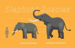 Διάνυσμα κινούμενων σχεδίων σύγκρισης μεγεθών ελεφάντων ελεύθερη απεικόνιση δικαιώματος