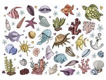Διάνυσμα κοχυλιών θάλασσας απεικόνιση αποθεμάτων