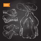 Διάνυσμα κρέατος κοτόπουλου Στοκ Εικόνα