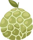 διάνυσμα κρέμας μήλων Στοκ Εικόνες