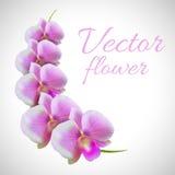 Διάνυσμα κλάδων λουλουδιών Στοκ Εικόνες