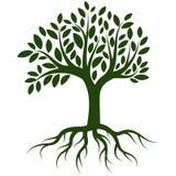 Διάνυσμα λογότυπων ριζών δέντρων απεικόνιση αποθεμάτων