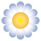 διάνυσμα λουλουδιών μαργαριτών ελεύθερη απεικόνιση δικαιώματος
