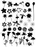 διάνυσμα λουλουδιών σύν& Στοκ Εικόνες