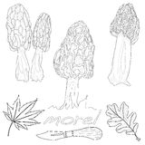 Διάνυσμα μανιταριών μορχέλλης Στοκ Εικόνες