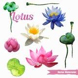 Διάνυσμα λουλουδιών Watercolor Στοκ φωτογραφίες με δικαίωμα ελεύθερης χρήσης