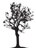 Διάνυσμα σκιαγραφιών κλαδίσκων δέντρων Στοκ Φωτογραφία