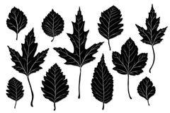 Διάνυσμα σκιαγραφιών φύλλων Στοκ εικόνα με δικαίωμα ελεύθερης χρήσης