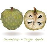 Διάνυσμα της Apple ζάχαρης Απεικόνιση αποθεμάτων