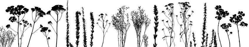 διάνυσμα φυτών χλόης Στοκ Εικόνες
