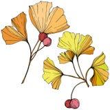 διάνυσμα Φύλλο Ginkgo Βοτανικός κήπος εγκαταστάσεων Απομονωμένο στοιχείο απεικόνισης ginkgo στο άσπρο υπόβαθρο απεικόνιση αποθεμάτων