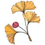 διάνυσμα Φύλλο Ginkgo Βοτανικός κήπος εγκαταστάσεων Απομονωμένο στοιχείο απεικόνισης ginkgo στο άσπρο υπόβαθρο διανυσματική απεικόνιση