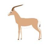 Διάνυσμα gazelle Στοκ Φωτογραφία