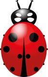 Διάνυσμα Ladybug στοκ εικόνες