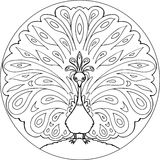 Διάνυσμα mandala χρωματισμού peacock Στοκ Εικόνες