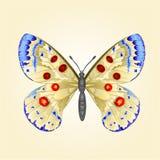 Διάνυσμα parnassius πεταλούδων Στοκ φωτογραφία με δικαίωμα ελεύθερης χρήσης