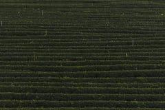 Διάσημη θέση έλξης ταξιδιού chui-Fong για το terraced κήπο τσαγιού Στοκ φωτογραφίες με δικαίωμα ελεύθερης χρήσης