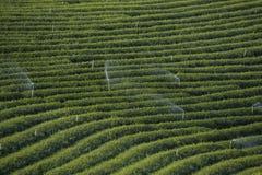 Διάσημη θέση έλξης ταξιδιού chui-Fong για το terraced κήπο τσαγιού Στοκ Εικόνες