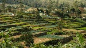 Διάσημοι μπλε εργαζόμενοι φυτειών τσαγιού της Σρι Λάνκα στοκ φωτογραφίες με δικαίωμα ελεύθερης χρήσης
