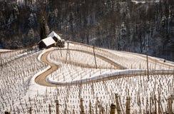 Διάσημος διαμορφωμένος καρδιά δρόμος κρασιού στη Σλοβενία το χειμώνα, Στοκ Εικόνα