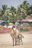 Διάσημος τόπος προορισμού τουριστών παραλιών Anjuna, Goa, Ινδία Στοκ εικόνα με δικαίωμα ελεύθερης χρήσης