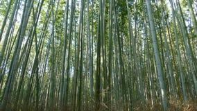 Διάσημο ορόσημο του Κιότο Ιαπωνία βουνών Arashiyama για τον τουρίστα με Στοκ Φωτογραφία
